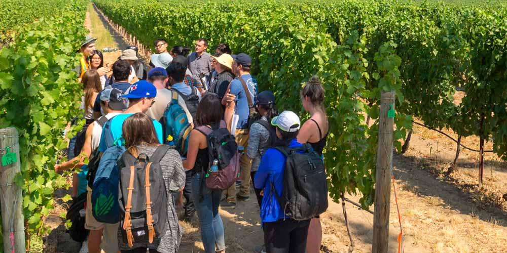 Students on field trip at Kelowna winery